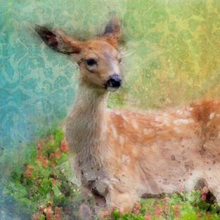 Deer Magic, Kevin Clifford