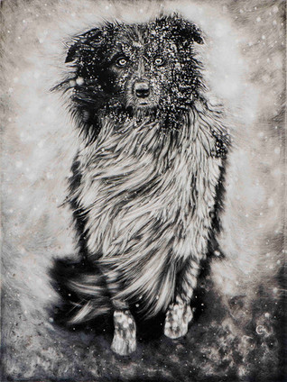 TOP 25 - Dog In Winter