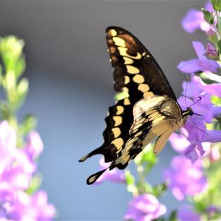 Backyard Beauty, K.Dawn Bloodworth
