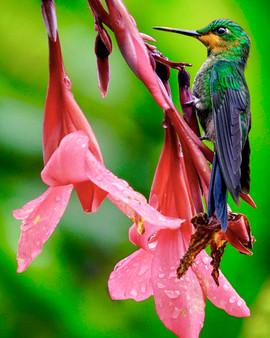 TOP 25 - Nectar Siesta