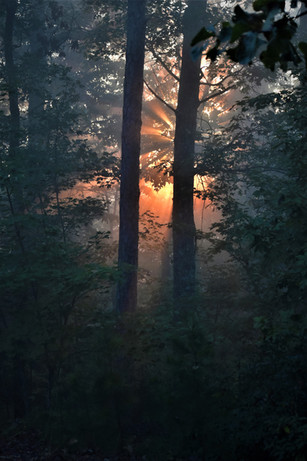 TOP 25 - Rays Through The Forest