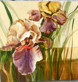 Golden Bearded Iris