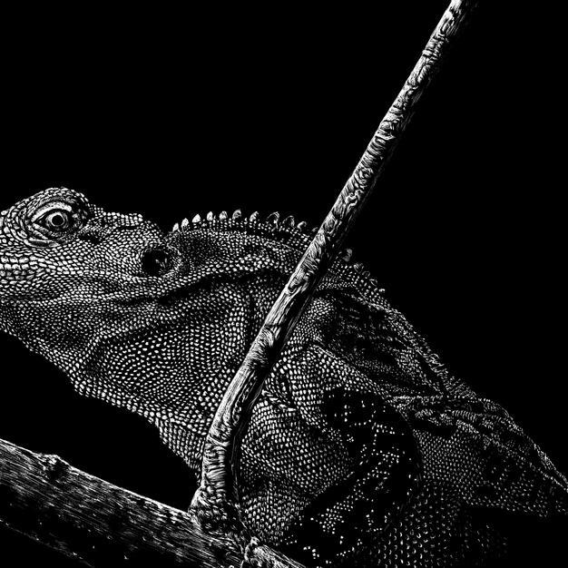 Creeping Iguana, Nathan Cole