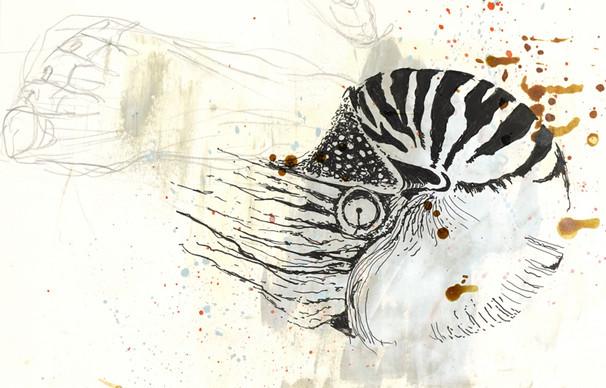 skizzieren.ch, Sandra Chiocchetti, Galerie SCHWIMMT & TREIBT