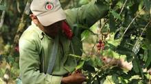 Ley agraria en Perú igual que en México