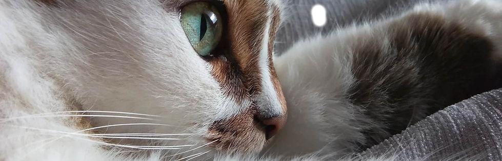 Photo d'un chat marron et blanc allongé sur un canapé
