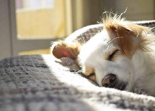 Photo d'un chien qui dort sur le canapé