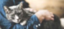 Photo d'un chat gris porté dans les bras