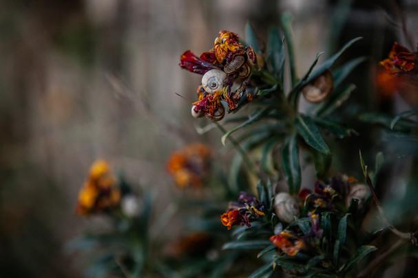 Flore à faune