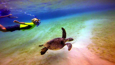 kayak tours, kayak rentals, snorkel tours, puako, kohala coast, big island hawaii