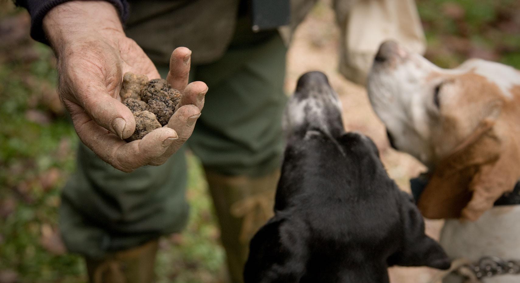 Truffle Hunting Sicily