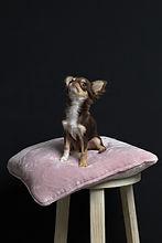 Rijnwijk Mijn Wijk_Doggy looking up.jpg