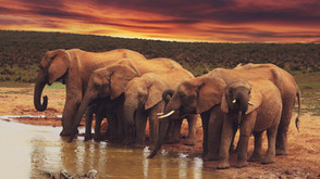 The Elephant in the Room - Mapping Global Wildlife Trade Data