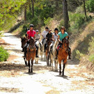 horses-riding-in-forest.jpg