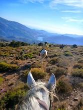 horse trail.jpg