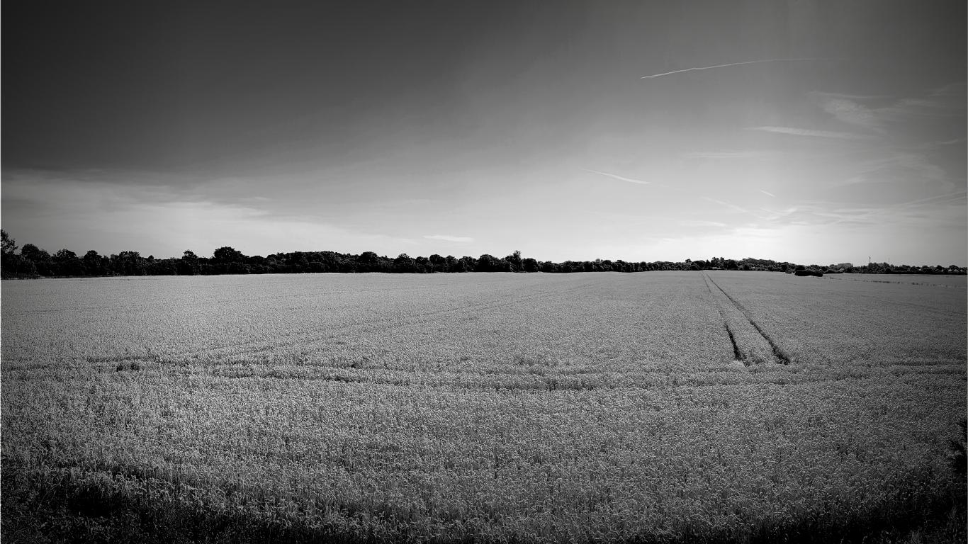 Web-field
