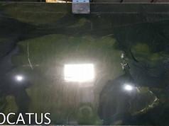Verde Avocatus