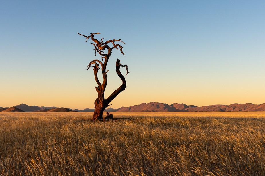 namibia-5_1.jpg