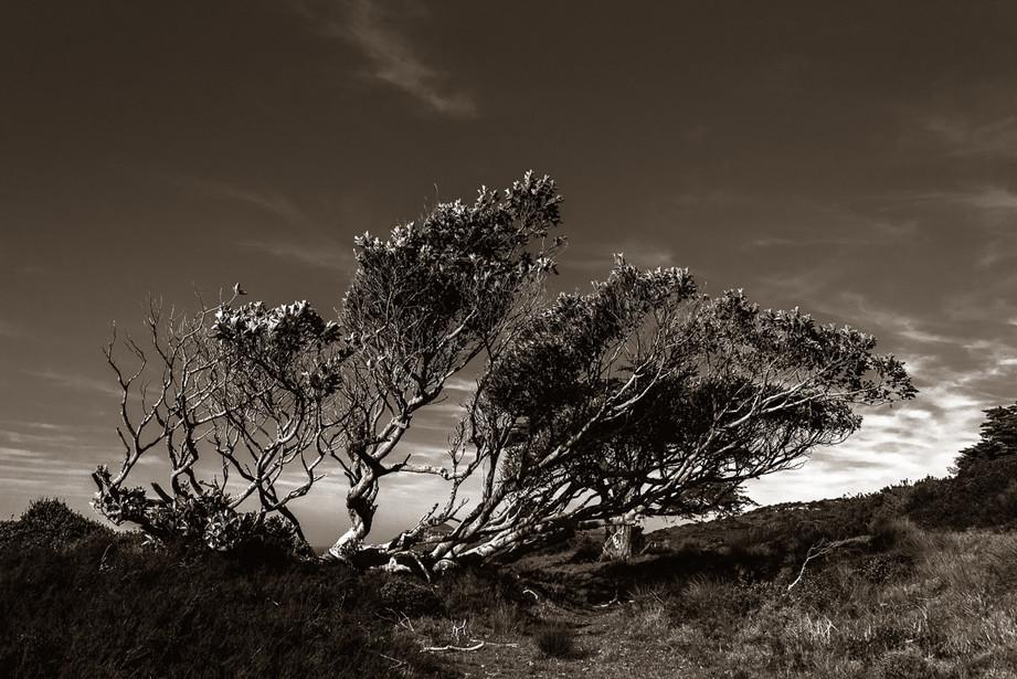 Cape_Point-5.jpg