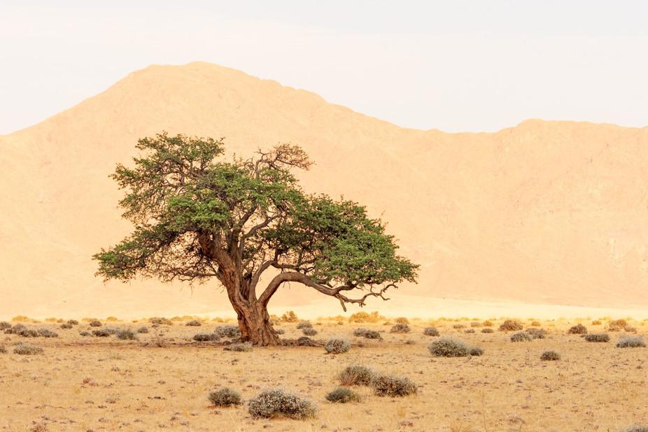 namibia-19_1.jpg