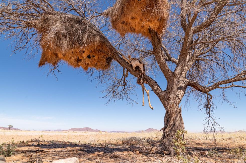 namibia-18_1.jpg