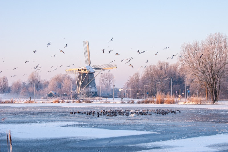 Amsterdam windmill.jpg