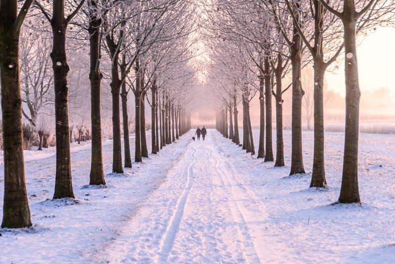 Amsterdam Amstelland after snow.jpg