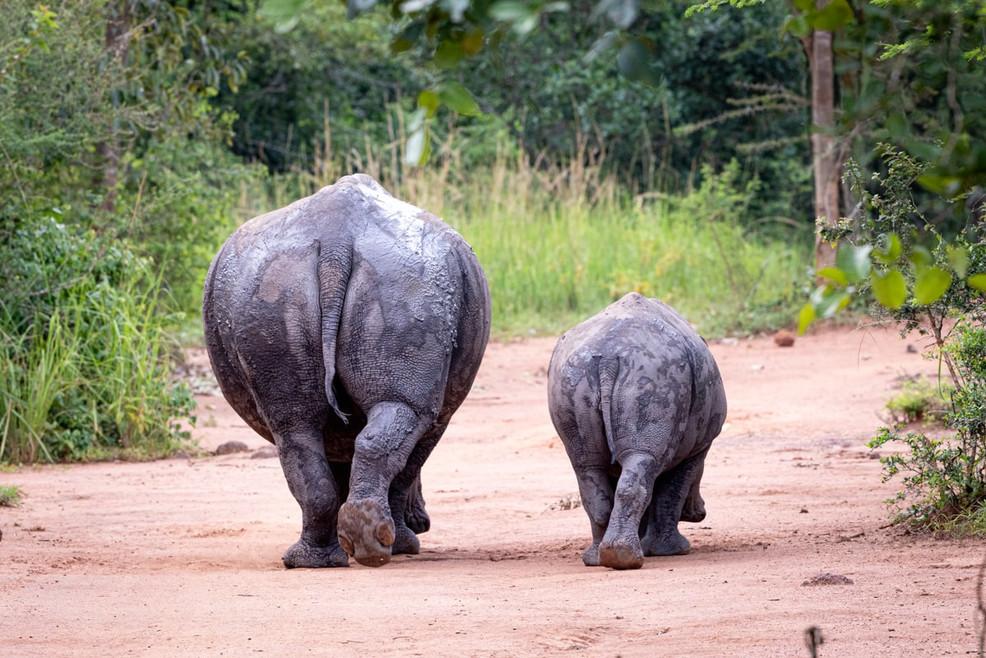 rhino_mother_and_calf.jpg