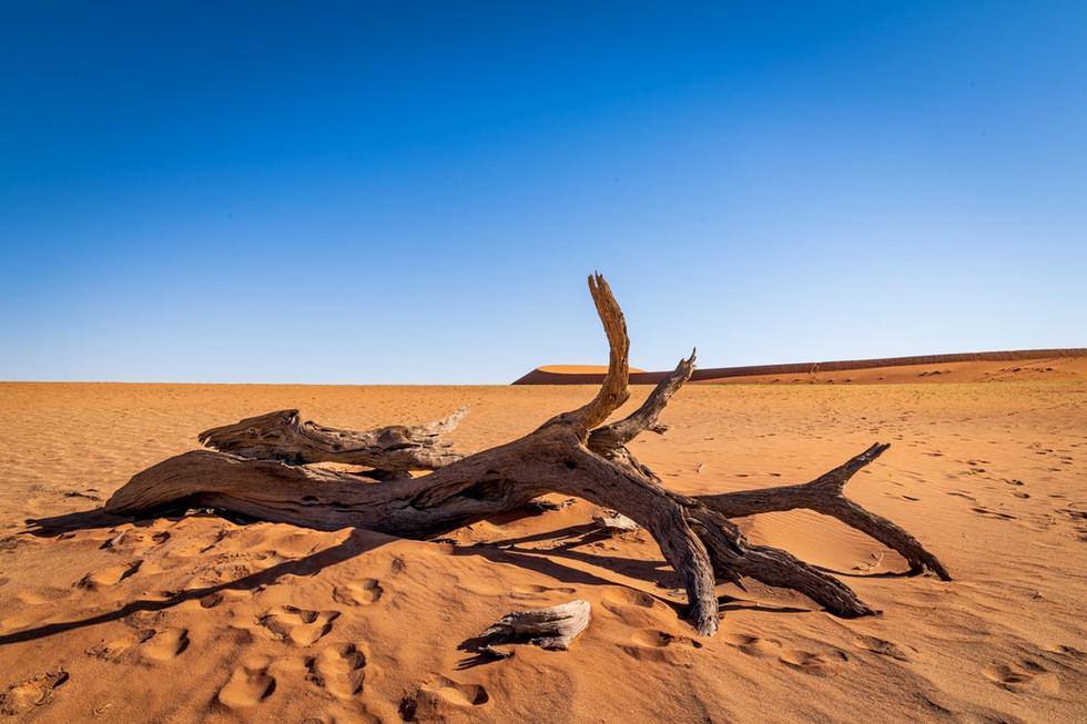 namibia-15_1.jpg