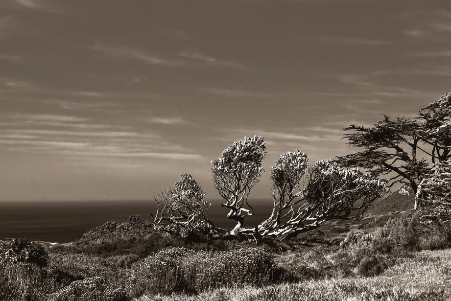 Cape_Point-4.jpg