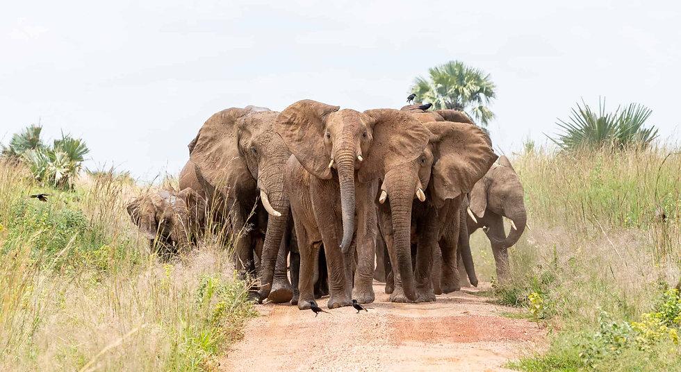 heard_of_elephants_3 (1).jpg