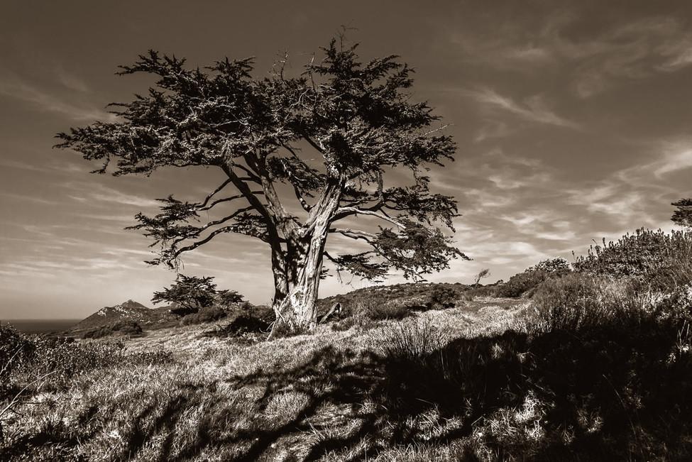 Cape_Point-7.jpg