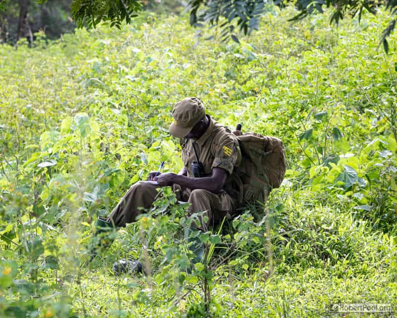 Ranger at Ziwa Rhino Sanctuary in Uganda recording behavioural data