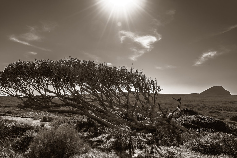 Cape_Point-3.jpg