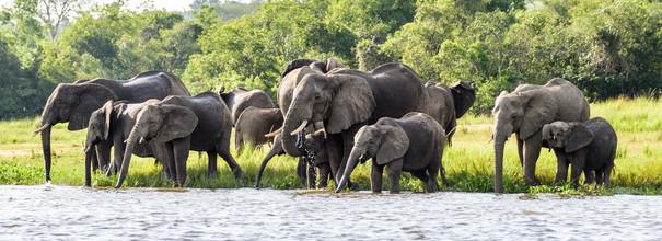 elephants_drinking_from_Nile.jpg