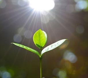 seed-patience-grow-blog-600x400.jpg