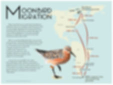MoonbirdMigration_web.jpg