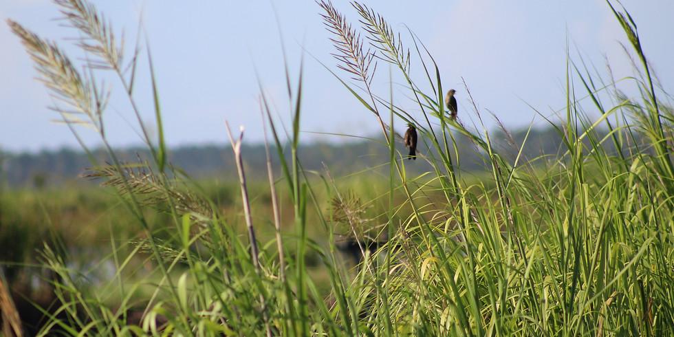 Salt Marsh Paddle - Toogoodoo