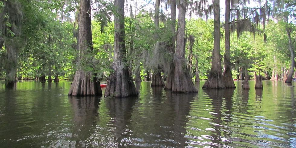 Cypress Swamp Paddle