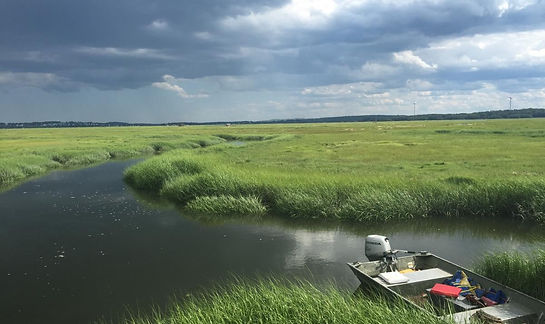 spartina_marsh1_caitlinbauer.jpg
