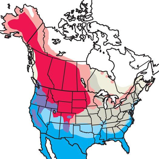 Northern-Shoveler_map.jpg