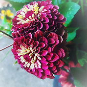 zinnia love_edited.jpg