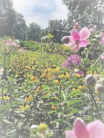 garden flowers_edited.jpg