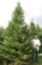 The Farms at Pine Tree Barn specializes in BIG trees