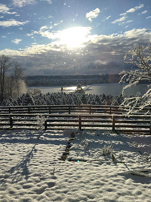 The Farms at Pine Tree Barn is 150 acres and has 75,000 Christmas trees