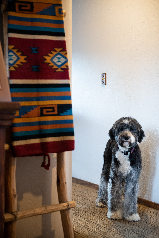 Dog Friendly Hotel in Golden, Colorado