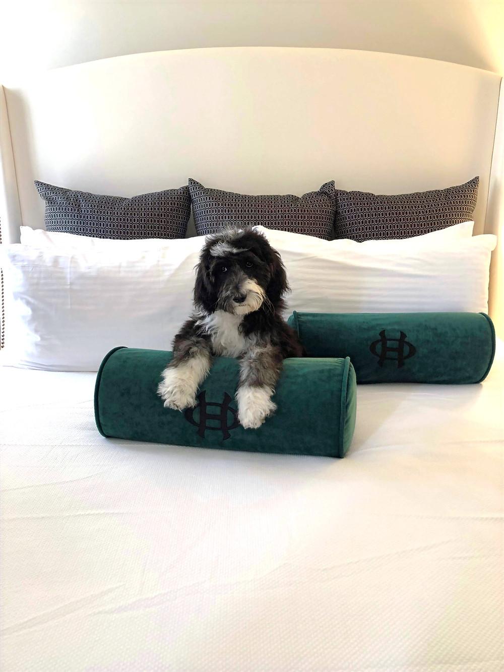 The Oxford Hotel dog friendly Denver