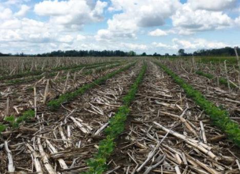 Prácticas agronómicas para aumentar los rendimientos