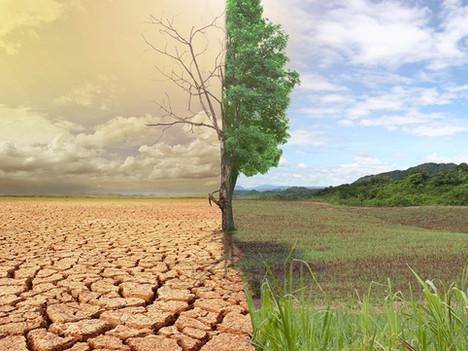 El Suelo ¿Cómo inician los procesos erosivos?