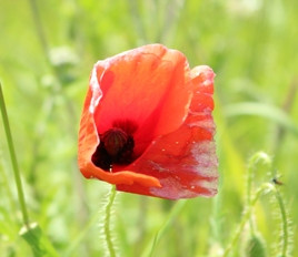 National Remembrance Service